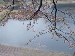 Mudpond-Sasebo