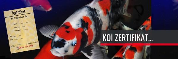 TEASER-Koi-Zertifikat