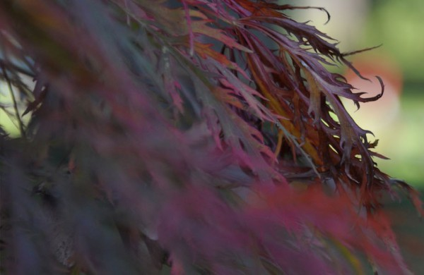 Der-Herbst-kommt-Teaser-Blogbild